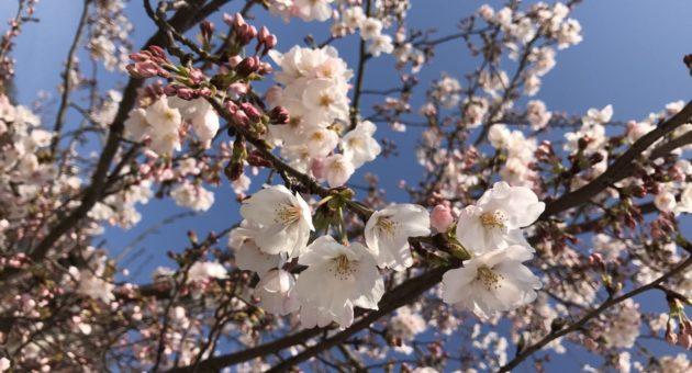 少しずつ暖かくなりもうすぐ春到来!?福岡市内のお出かけ情報
