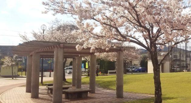 春に行きたいお花見スポット!『諸岡中央公園』
